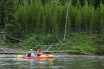 Kayakers float by young lodgepole pine trees