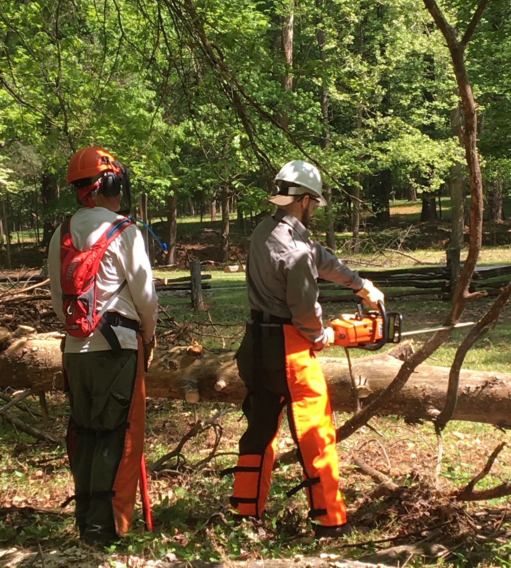 A sawyer uses a chainsaw to remove limbs while the instructor observes from behind.