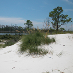 Horn Island includes white sandy dunes and brackish ponds