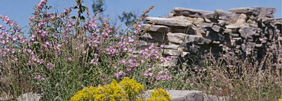 Wildflowers showcase the Pinery Ruins.