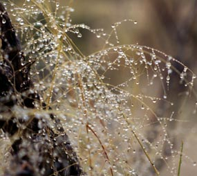 Dewdrops shine like glass beads on the wet grass stems.