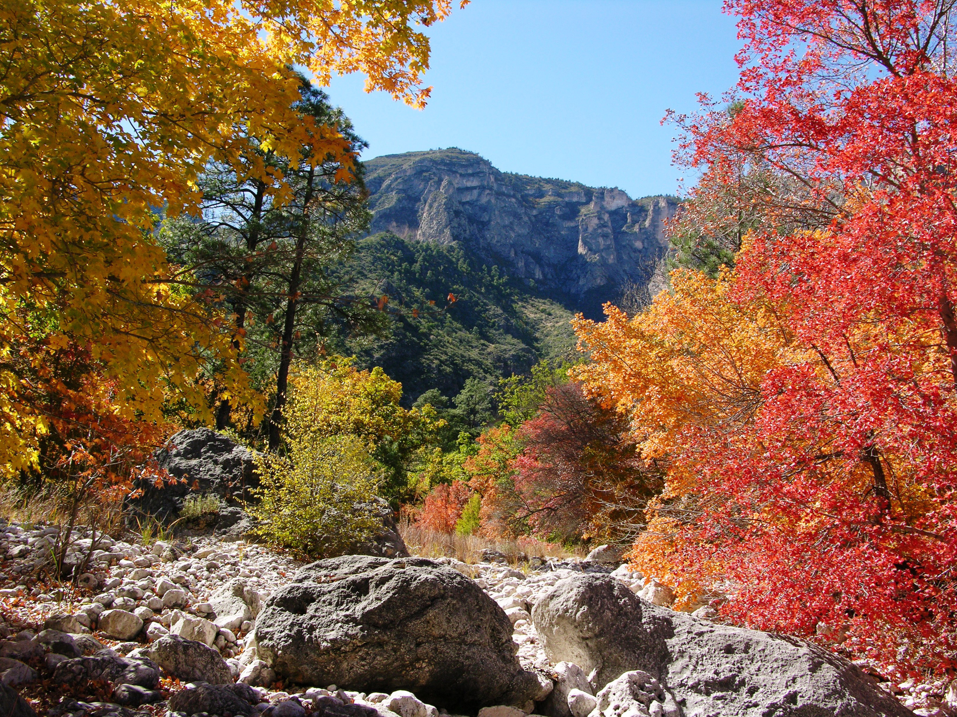 Fall Colors In Mckittrick Canyon