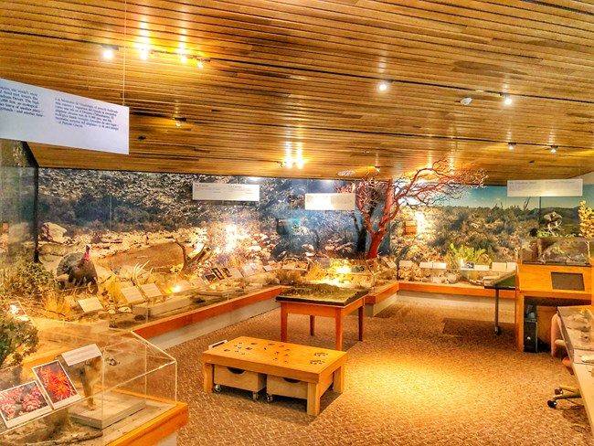 Pine Springs visitor center exhibits