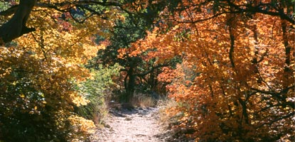 Beautiful fall colors adorn McKittrick Canyon.