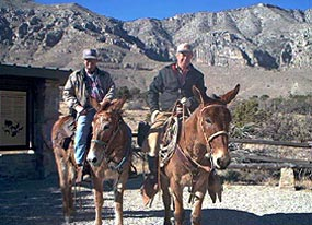 Riders prepare to explore the park on mules.