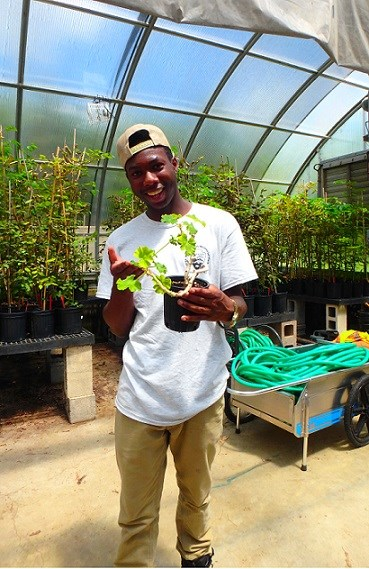 YCC member working in greenhouse