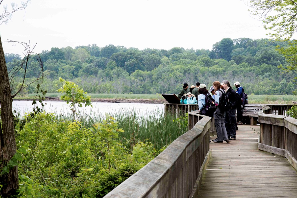 Visitors enjoy the scenic view of the Potomac River from the boardwalks that wind through the Dyke Marsh Wildlife Preserve