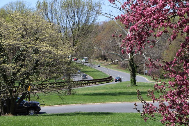 Pretty image of the parkway in spring.