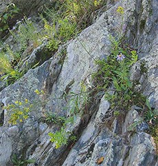 Wildflowers and lichens cling to a bedrock terrace