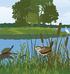 Print of a turtle, a marsh wren, and an egret in Dyke Marsh