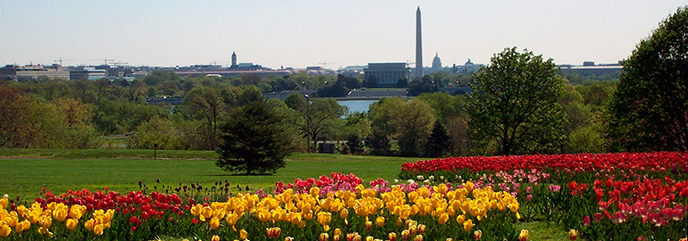 Floral library with Washington Monument in background