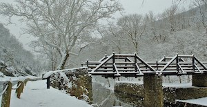 snow covered landscape, showing sycamore trees along a historic canal and a wooden bridge spanning the canal