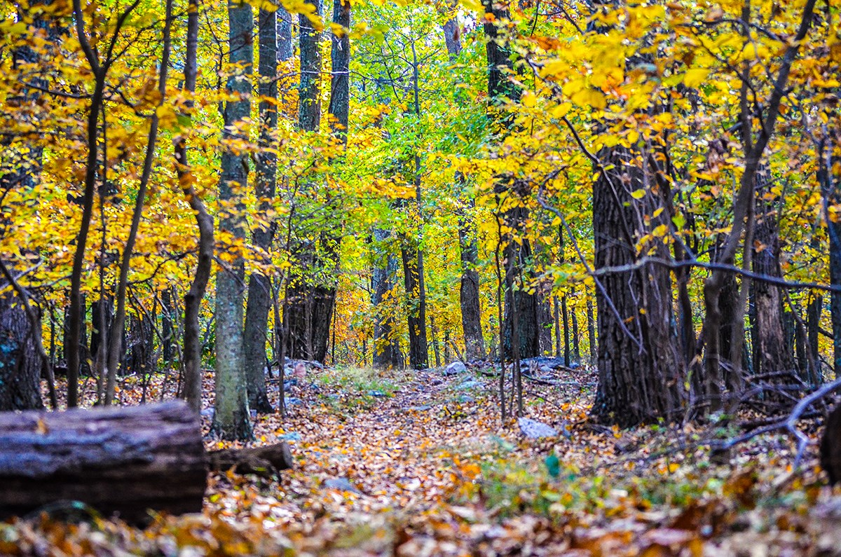 path in the woods with leaves on the ground; some leaves on trees are green, others are turning shades of yellow and orange