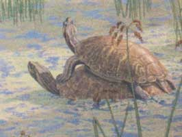 Hagerman fossil pond turtle