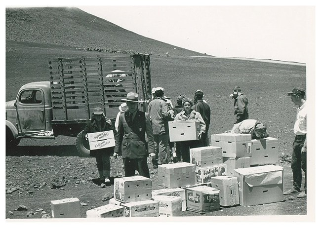 Maui Boy Scouts unloading boxes containing nēnē to take to Palikū in 1962 during their reintroduction on Maui. Nēnē had originally disappeared from Maui by the 1890s.
