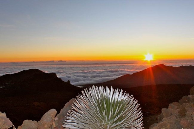Sun rising over Haleakala Crater with a silversword in the foreground.