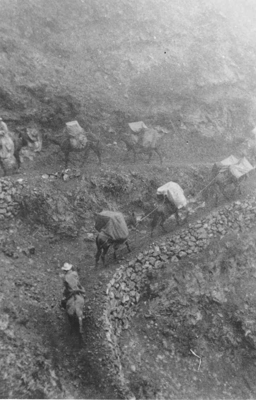 CCC and pack mules on Halemau'u Trail in 1937 (Haleakalā National Park archives).