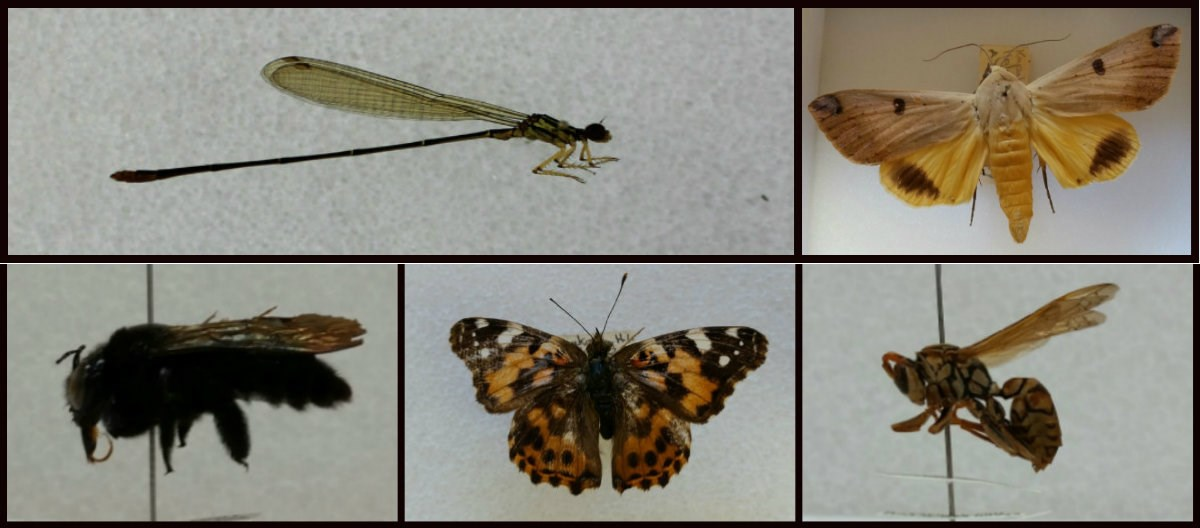 entomology collection