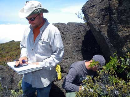 Haleakalā's Vegetation Management Crew records endangered plant outplantings as part of their Inventory and Monitoring Program.
