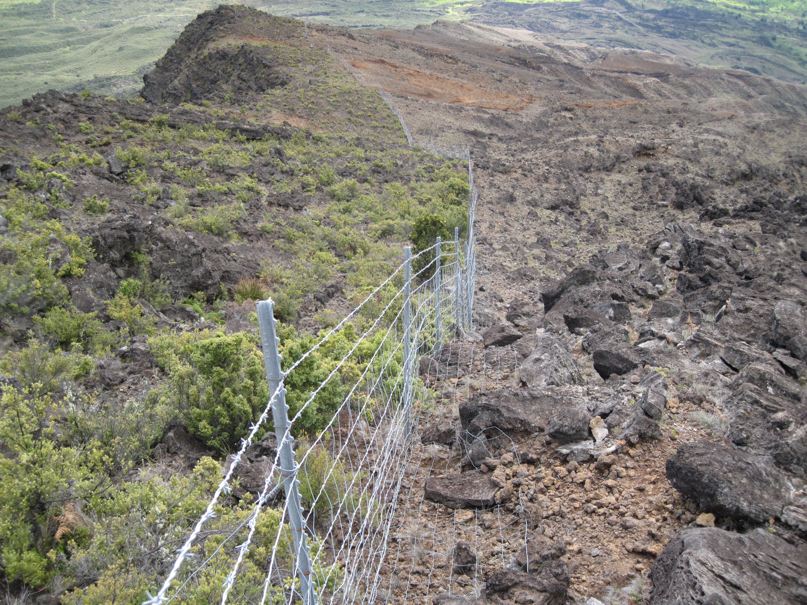 Existing park boundary fence along the upper elevations near Nu'u and Kaupo Gap. Left side shows habitat recovery. Right side shows areas impacted by feral animals.