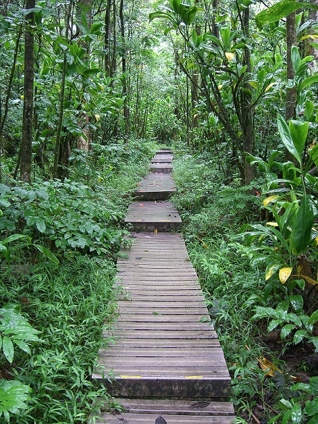 Pipiwai boardwalk