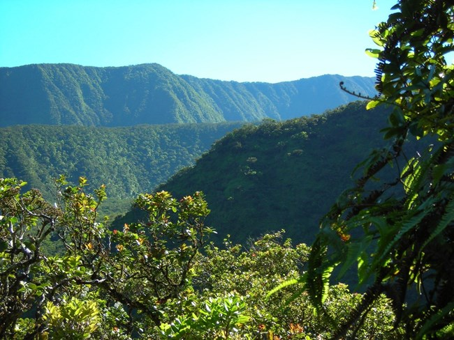 View of the Upper Kīpahulu Valley.