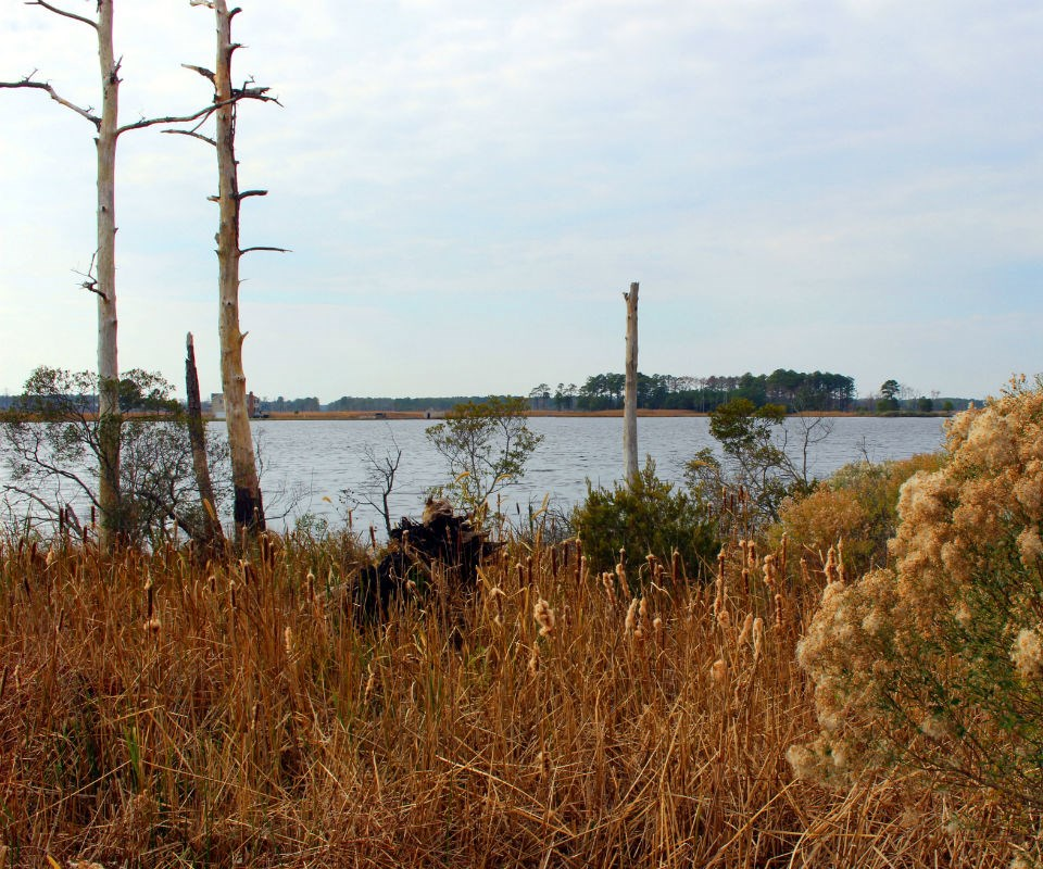 Brown marshes with dead trees in the foreground and on the horizon.