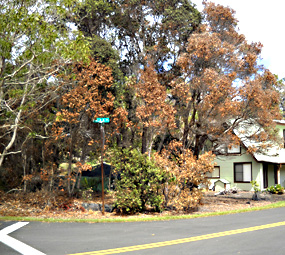 Dead trees and brush pose a threat to nearby homes.
