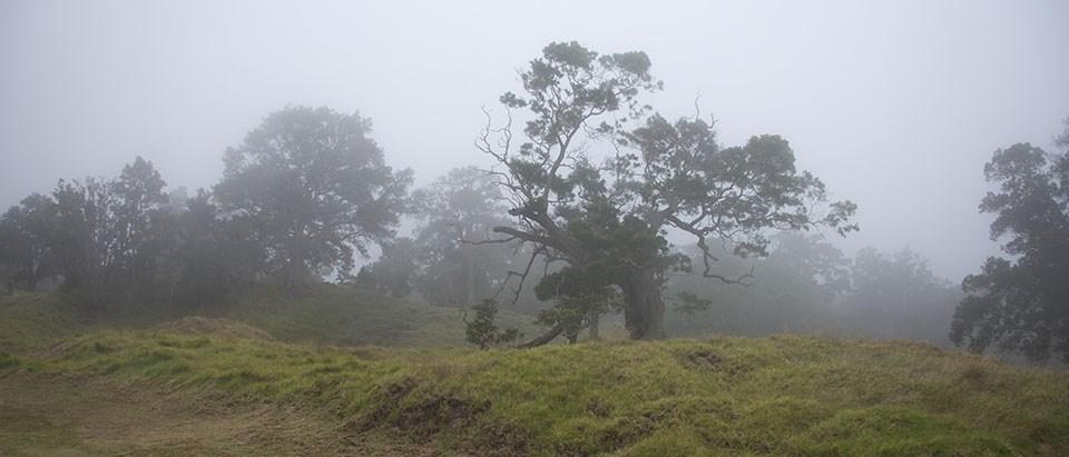 Nature - Hawai'i Volcanoes National Park (U.S. National Park Service)