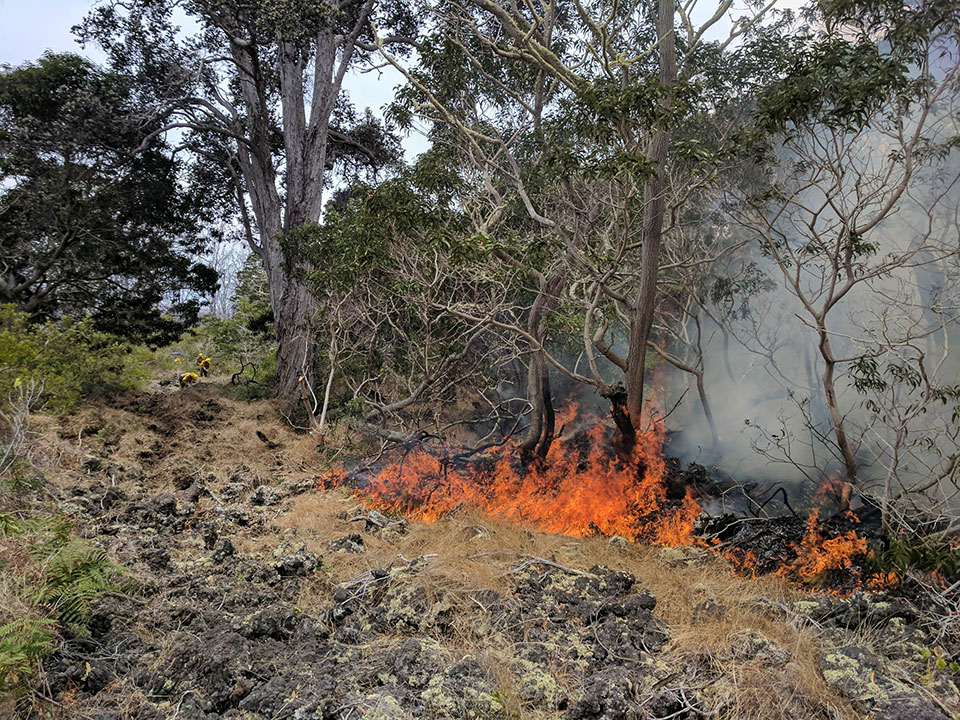 Fire burns native forest in Hawaii Volcanoes National Park as firefighters engage in suppression efforts