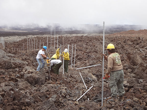 Park staff install the cat-proof fence in rough and rugged high-elevation lava fields on the slopes of Mauna Loa. The five-mile-long fence protects more than 600 acres of Hawaiian petrel habitat, and could be the longest of its kind in the United States