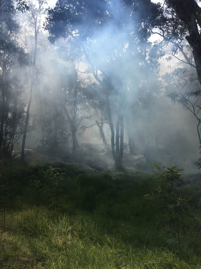 Smoke wafts through forest
