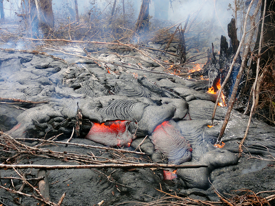 Pāhoehoe lava advancing through forest downslope of Pu'u 'Ō'ō on November 20, 2014.