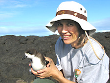 National Park Service ecologist Darcy Hu releases endangered Hawaiian petrel on the coast of Kilauea