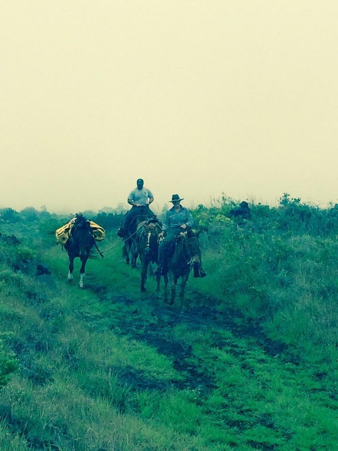 Mules and first responders on Keauhou Trail