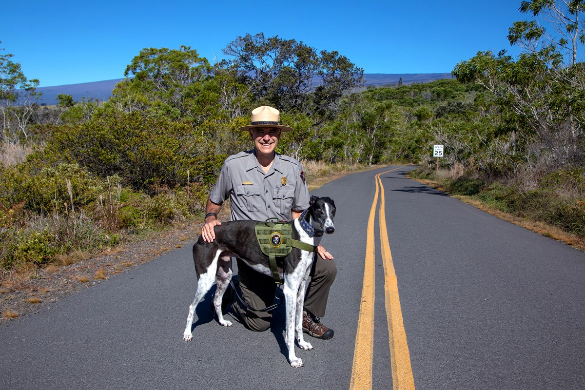 Park Ranger kneeling on a road next to a dog in a green harness