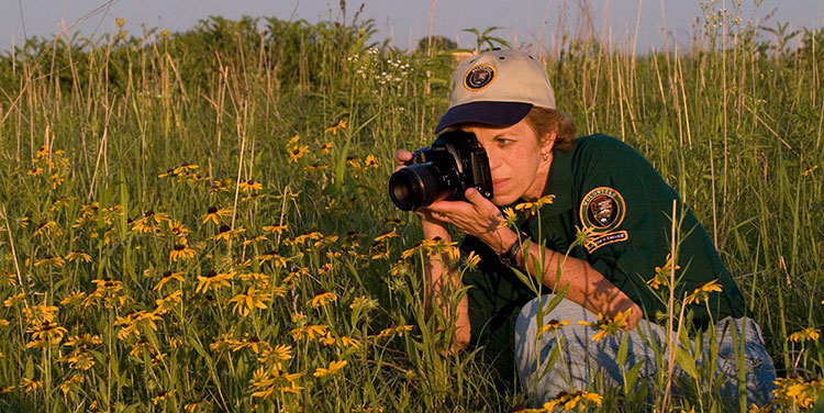 A woman in a volunteer shirt and hat photographing yellow flowers in the prairie.