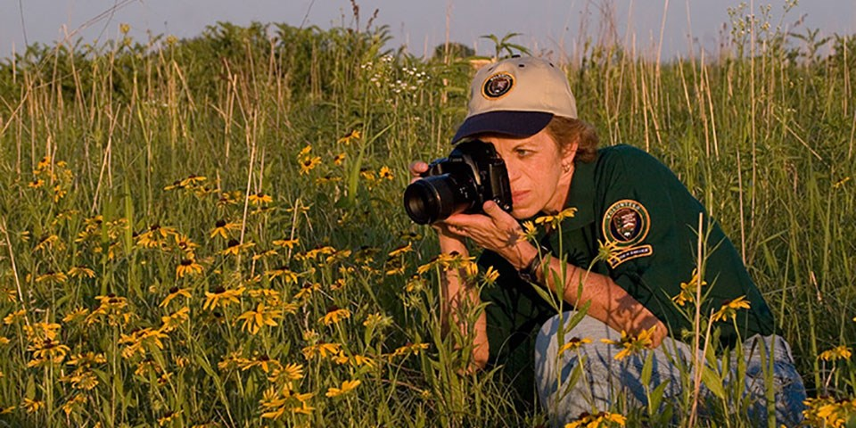A woman in a uniform shirt and hat photographing yellow flowers in the prairie.