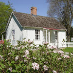 White cottage with flowering bush in the foreground.