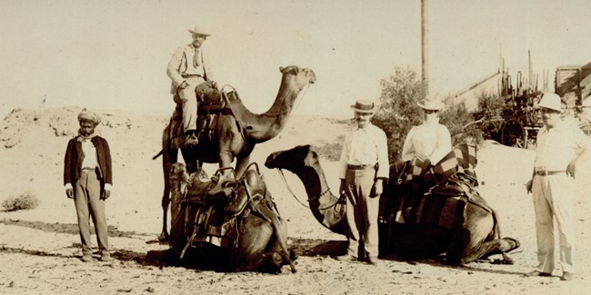 A groups of men in the desert pose with two camels.