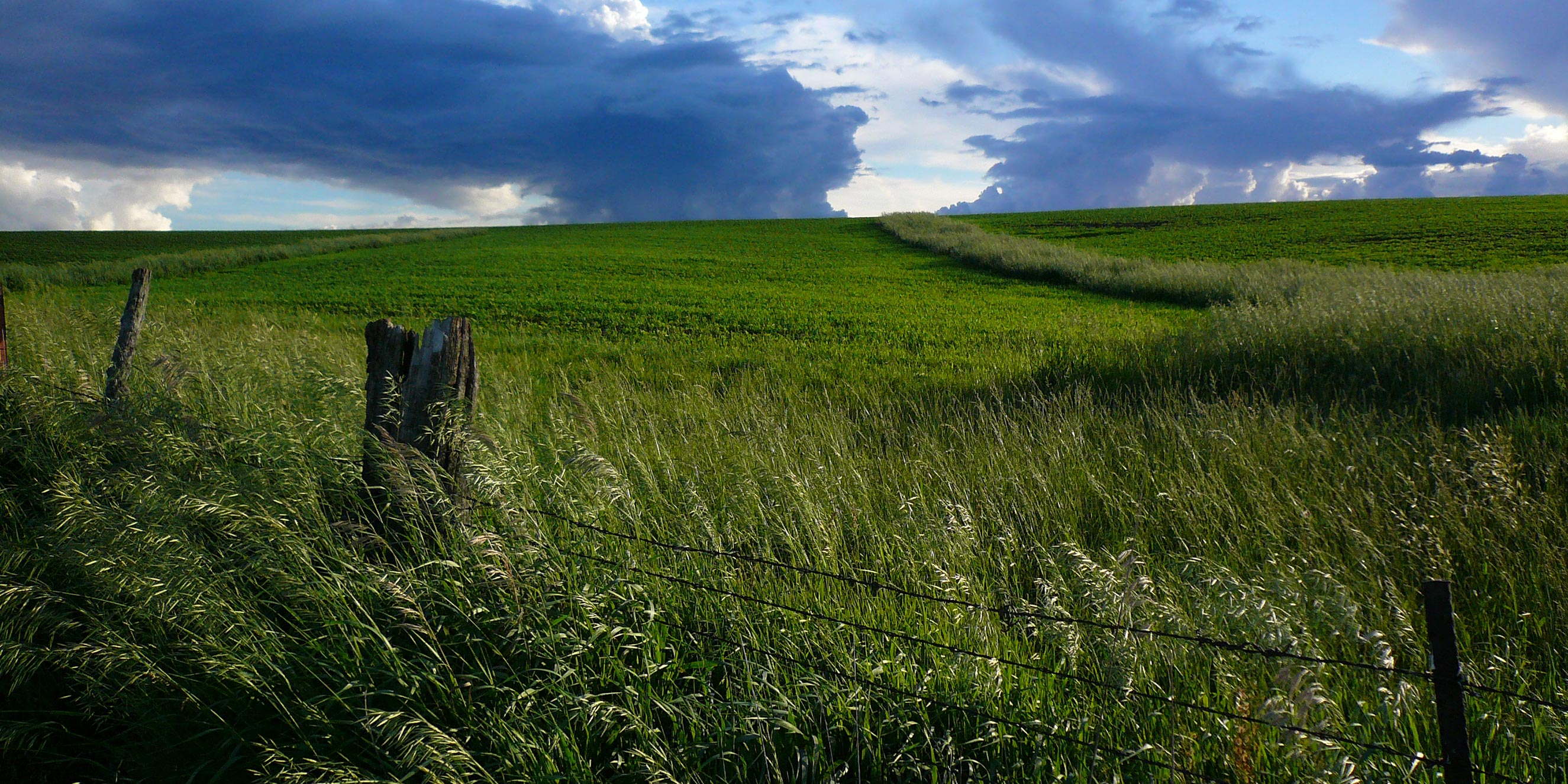 Tall grasses grow along a barbed wire fence line where a prairie and a farm border each other.