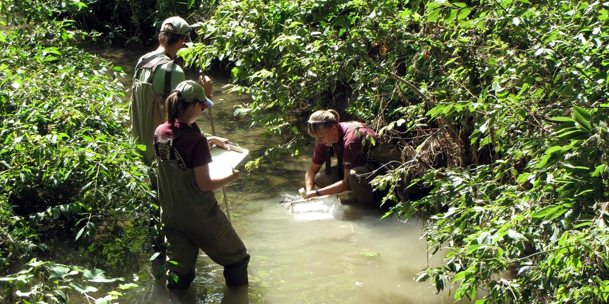 Three scientists wade in a shallow creek with equipment for sampling aquatic invertebrates.