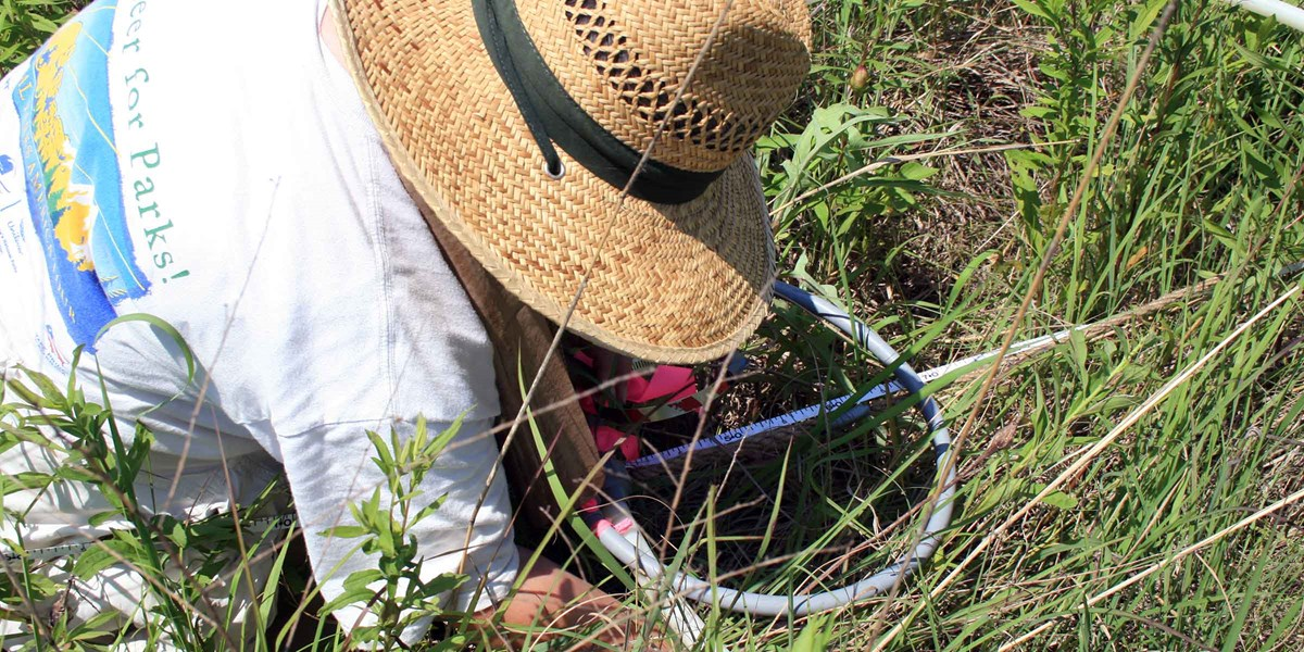 A scientist in straw hat examines plant species inside a circular plot.