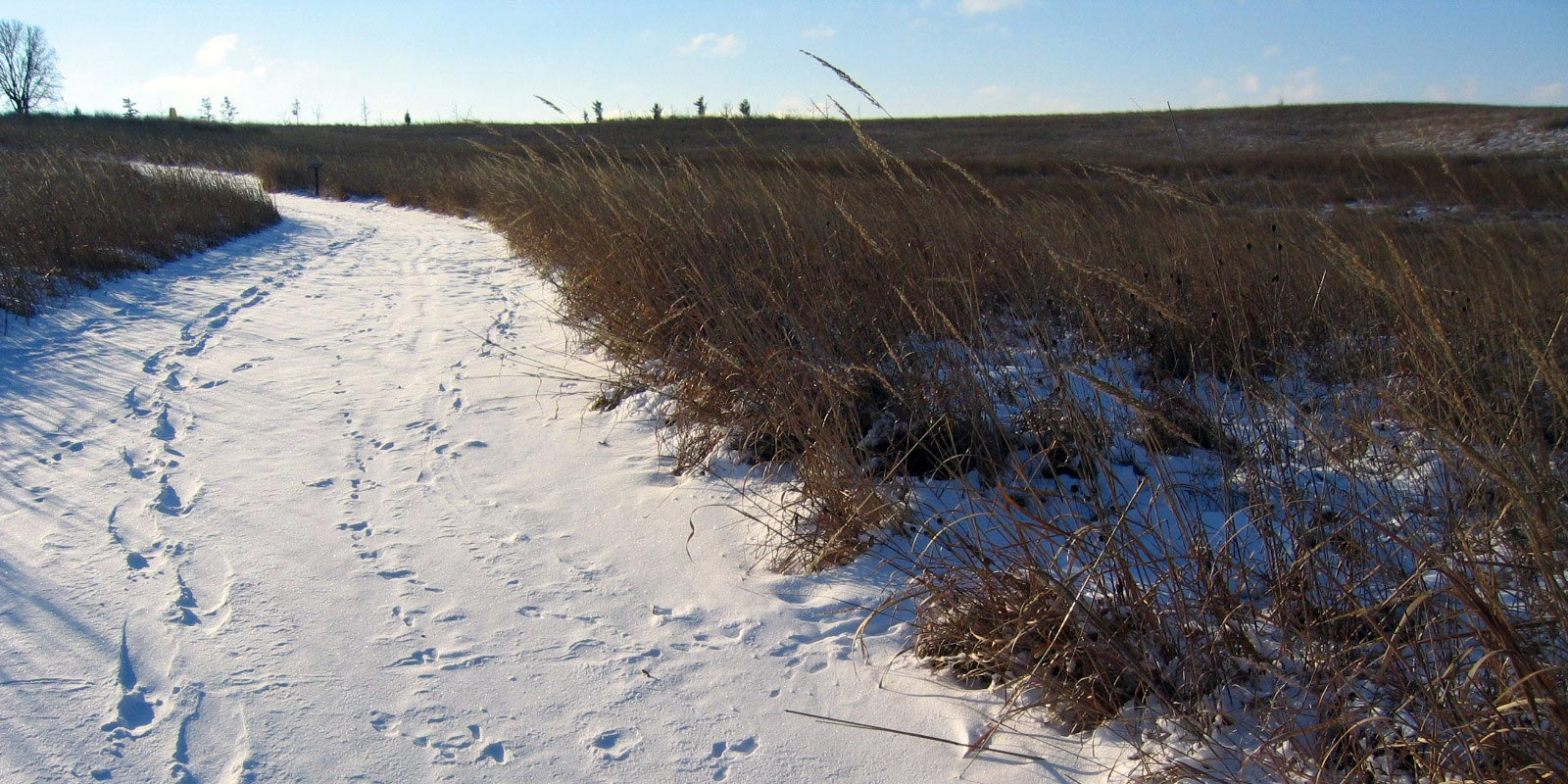 A snow covered trail through a grassland shows tracks of snowshoes alongside animal tracks.