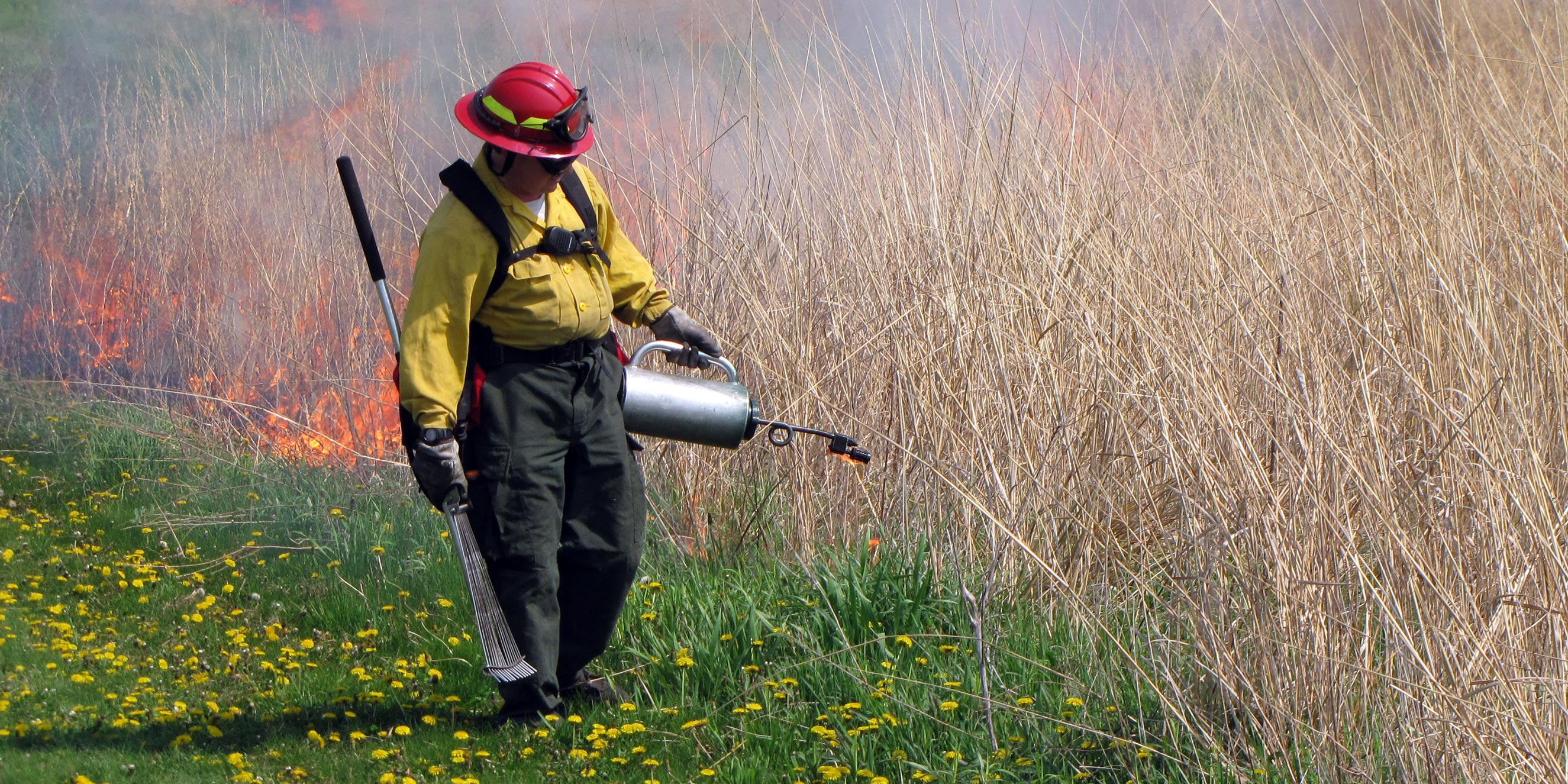 A firefighter walks along a prairie trail lighting dry grasses on fire.