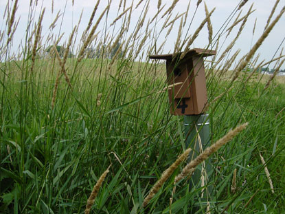 A blue bird nest box surrounded by tall grasses.