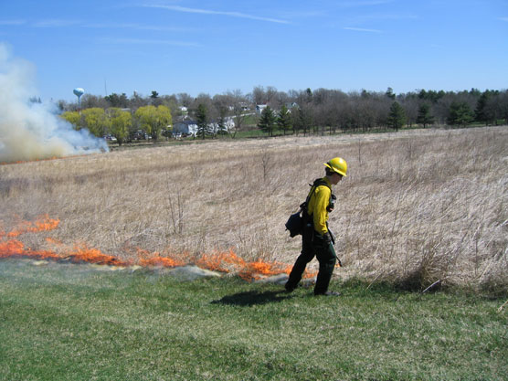 A firefighter in yellow gear ignites the brown prairie grasses with a drip torch.