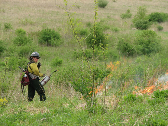 A woman in yellow firefighting gear ignites a green prairie with a drip torch.
