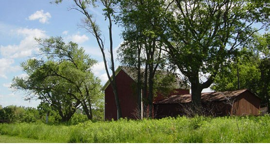 A red barn shaded by trees as seen from the green tallgrass prairie.