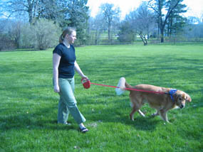 Woman walking a golden retriever on a leash.